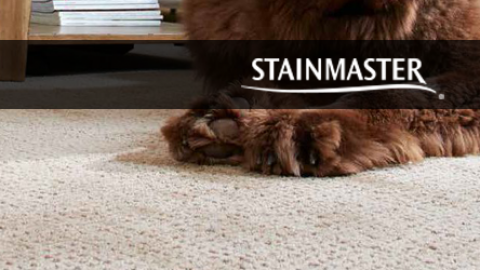 Stainmaster PetProtect Carpet Review